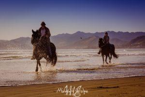 Horses on the Beach (1 of 1) (1024x683)
