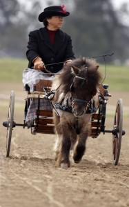 Stephanie Szabo and her Very Fine Equine Miniature horse and carriage.