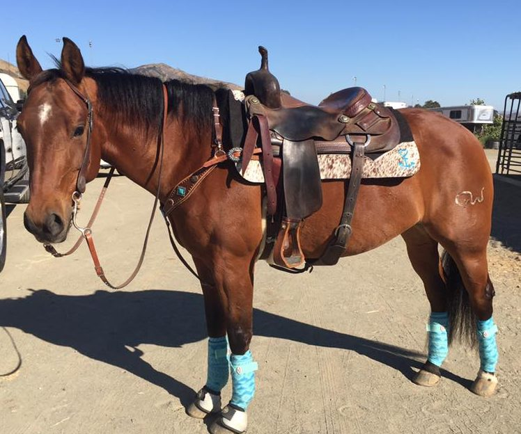 Holly's Mare Get A Mister