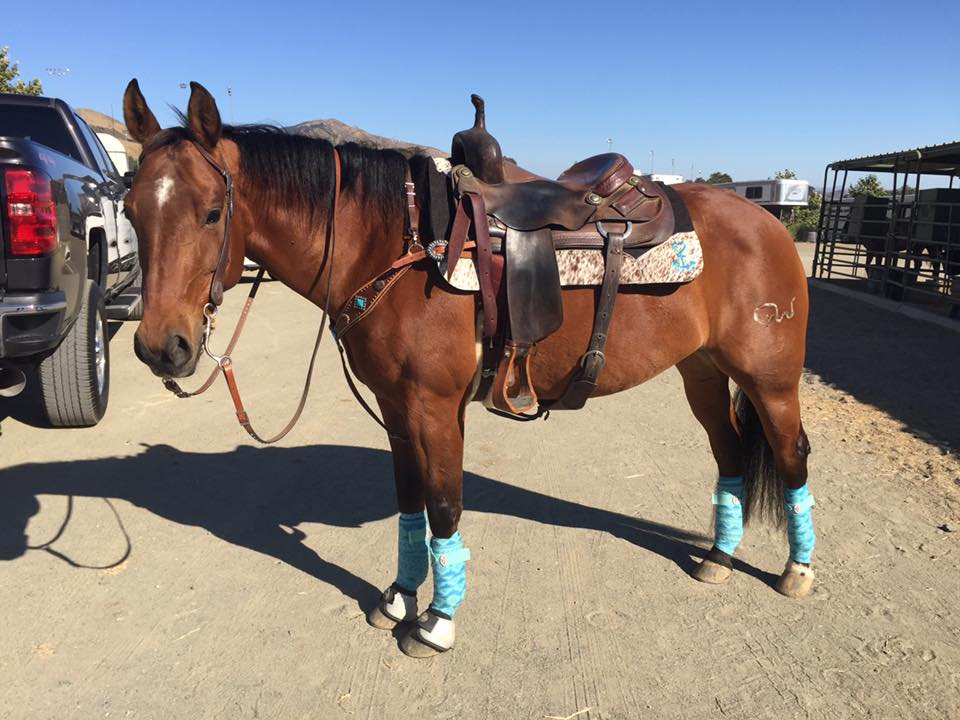 Fit, Function and Fun of the Western Saddle Pad