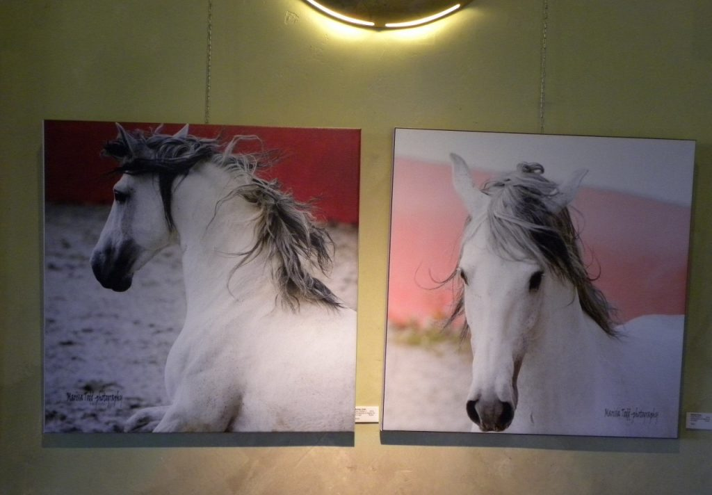Marissa Todd Equine Photograhy Art