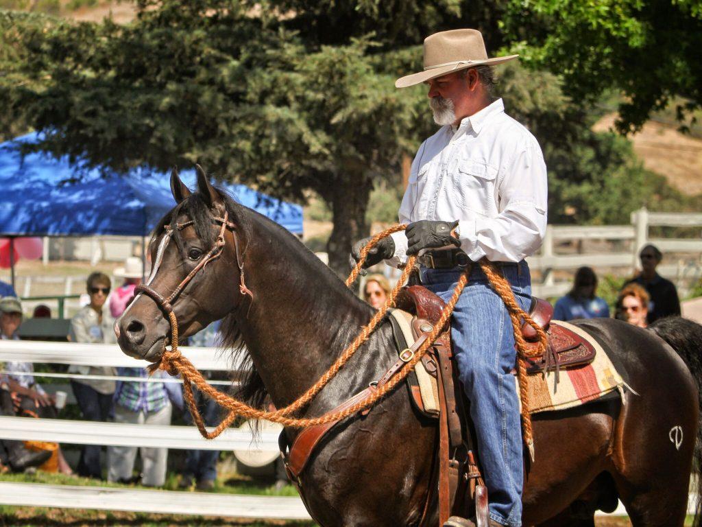Lester Buckley riding Major Mac V. Photo: Chris Weigl