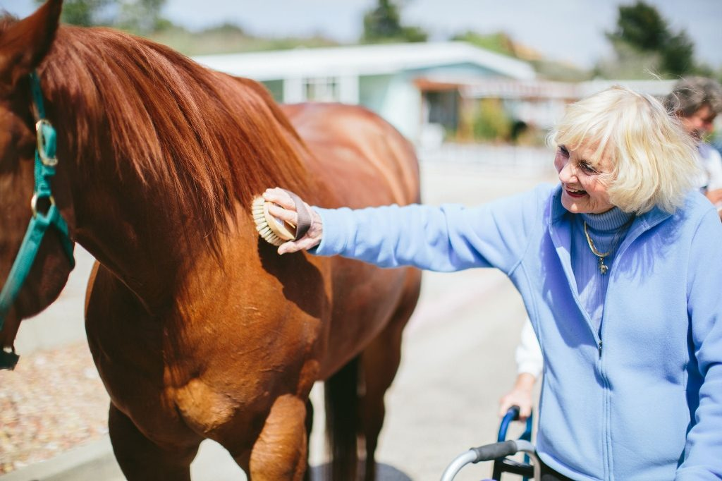 Equine Therapy For Senior Citizens Making A Difference