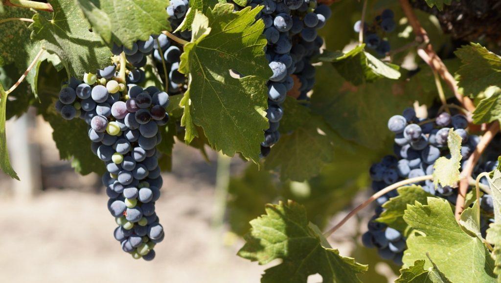 Vintage Cowboy Winery 2016-08-30 010 (1024x580)