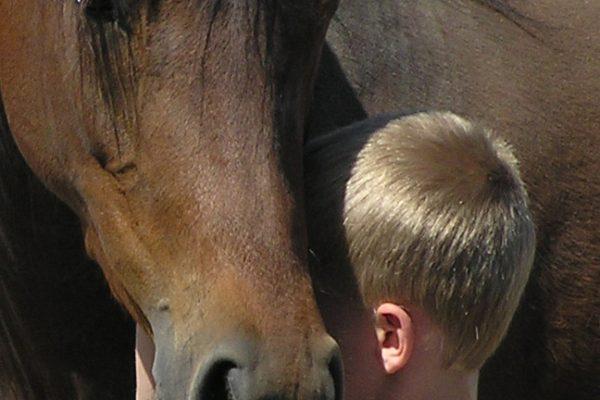 little-boy-snuggling-horse