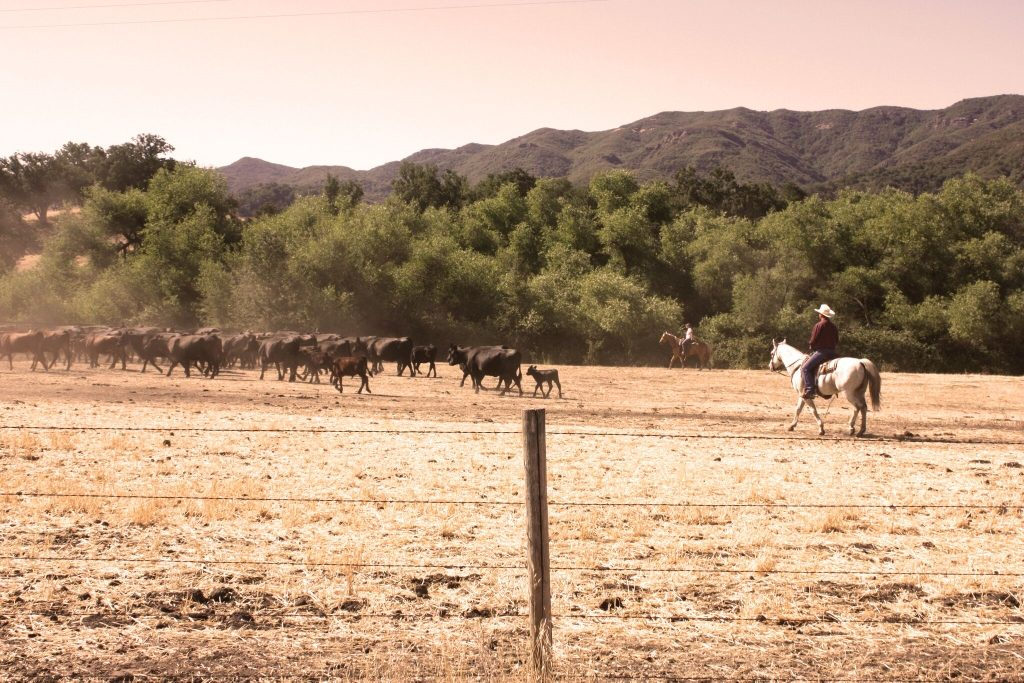 Working Cattle Ranch Photo: Jessica Arnold