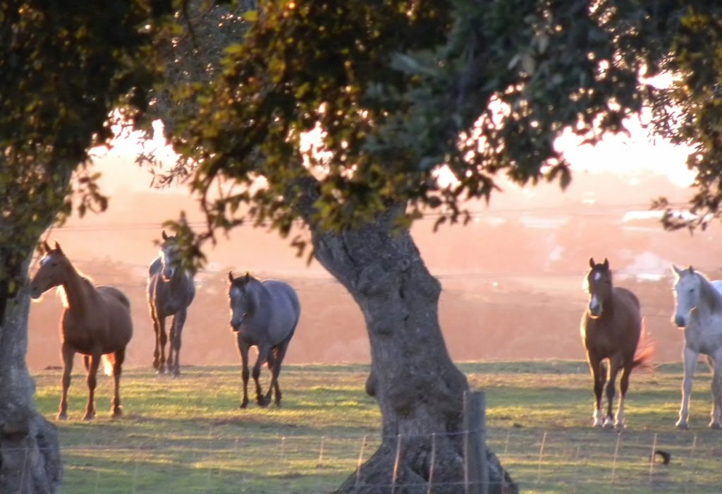 horses-under-the-cork-trees-lines-removed-1024x768