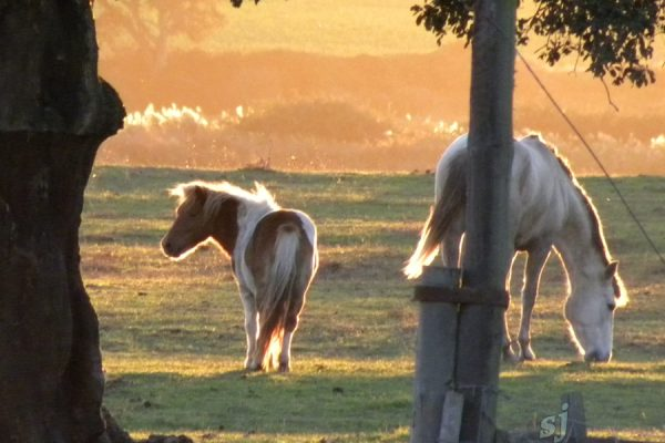 pony-and-buddy-with-sunset-light-sj