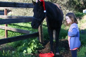10 Steps to Planning a Horse Riding Holiday Party