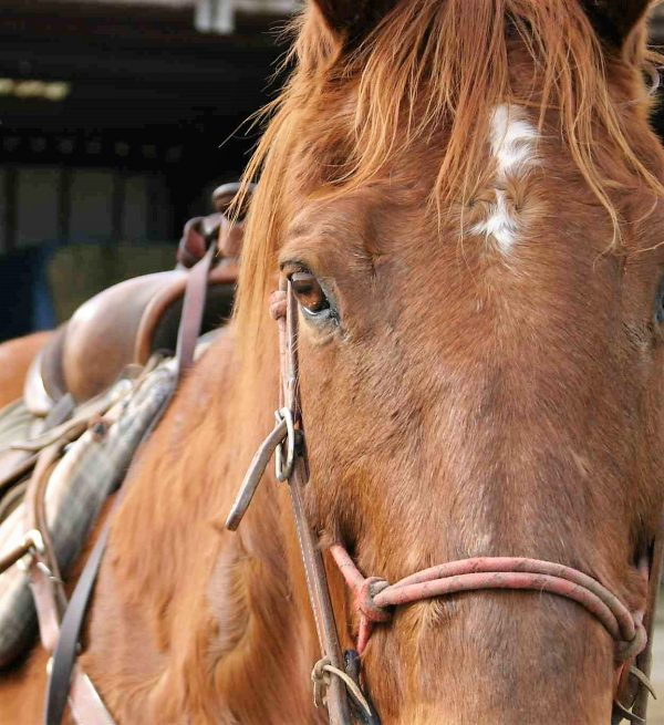 Little Lessons That Matter – A Horsewoman's Journey | SLO Horse News