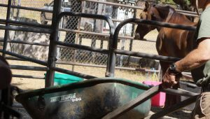 Why Raking Up Horse Poop is Therapeutic | SLO Horse News