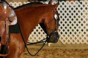 The Arabian Horse Could be Your Perfect Partner