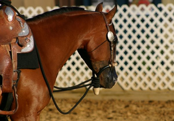 The Arabian Horse Could be Your Perfect Partner | SLO Horse News