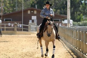 Mares Over Geldings – Are Mares Really the Best?