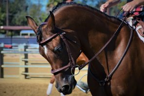 Arabian Horse Saves Mary Beth's Life