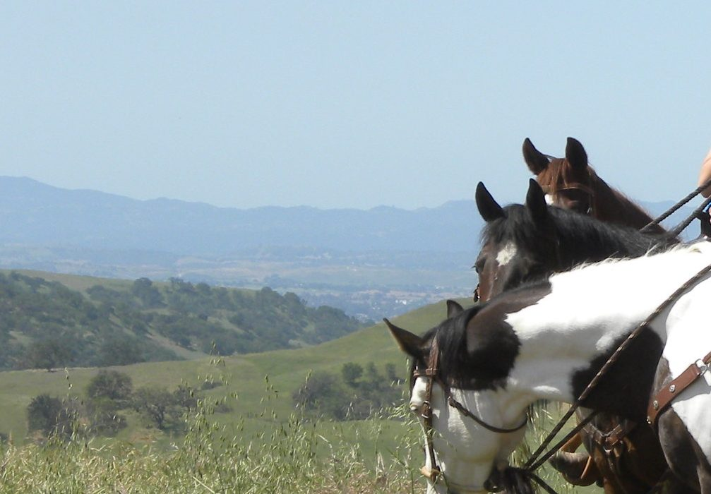 Experiencing a Slice of Paradise : The Work Ranch Benefit Trail Ride | SLO Horse News