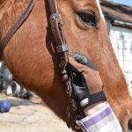 Are You and Your Horse Ready to Ride the Trails? | SLO Horse News