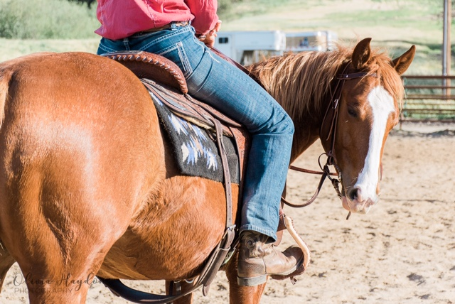 The Cal Poly Horse Unit Has Some Exciting Things in Store | SLO Horse News
