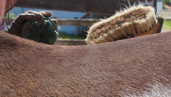 Grooming Your Horse - A Vital Aspect of Horsemanship | SLO Horse News