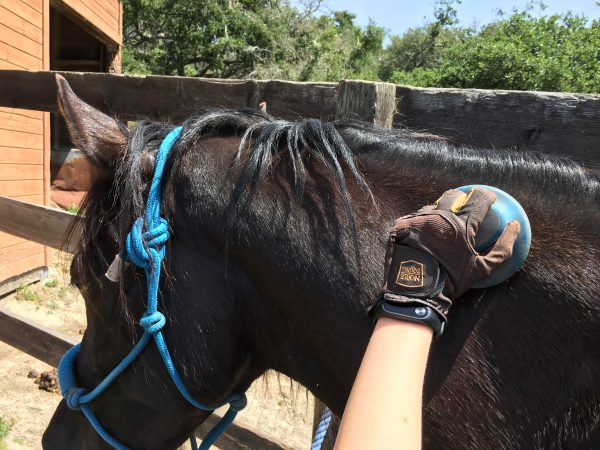 How to Streamline Your Grooming Routine   SLO Horse News