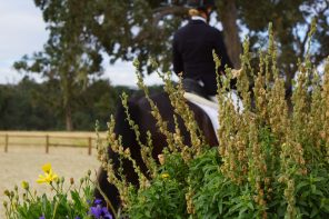 Paso Robles Dressage Summer Classic : A Step on the Path to International Dressage Competition