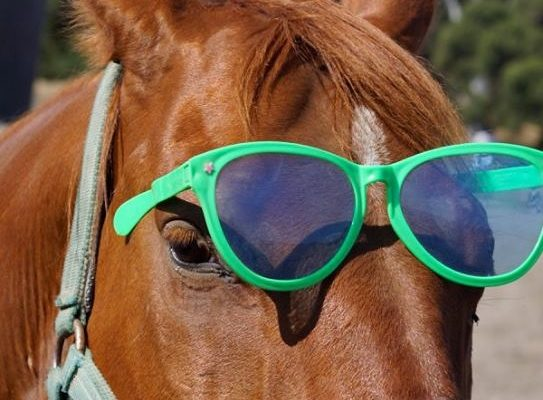 Keep Your Cool – Beat the Heat in the Saddle this Summer | SLO Horse News