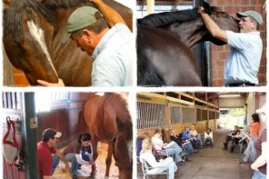 Learn How to Relieve Your Horse's Tension in This Hands-on Clinic
