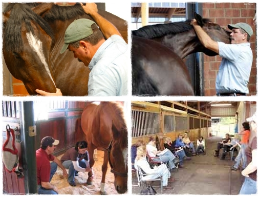 Learn How to Relieve Your Horse's Tension in This Hands-on Clinic | SLO Horse News