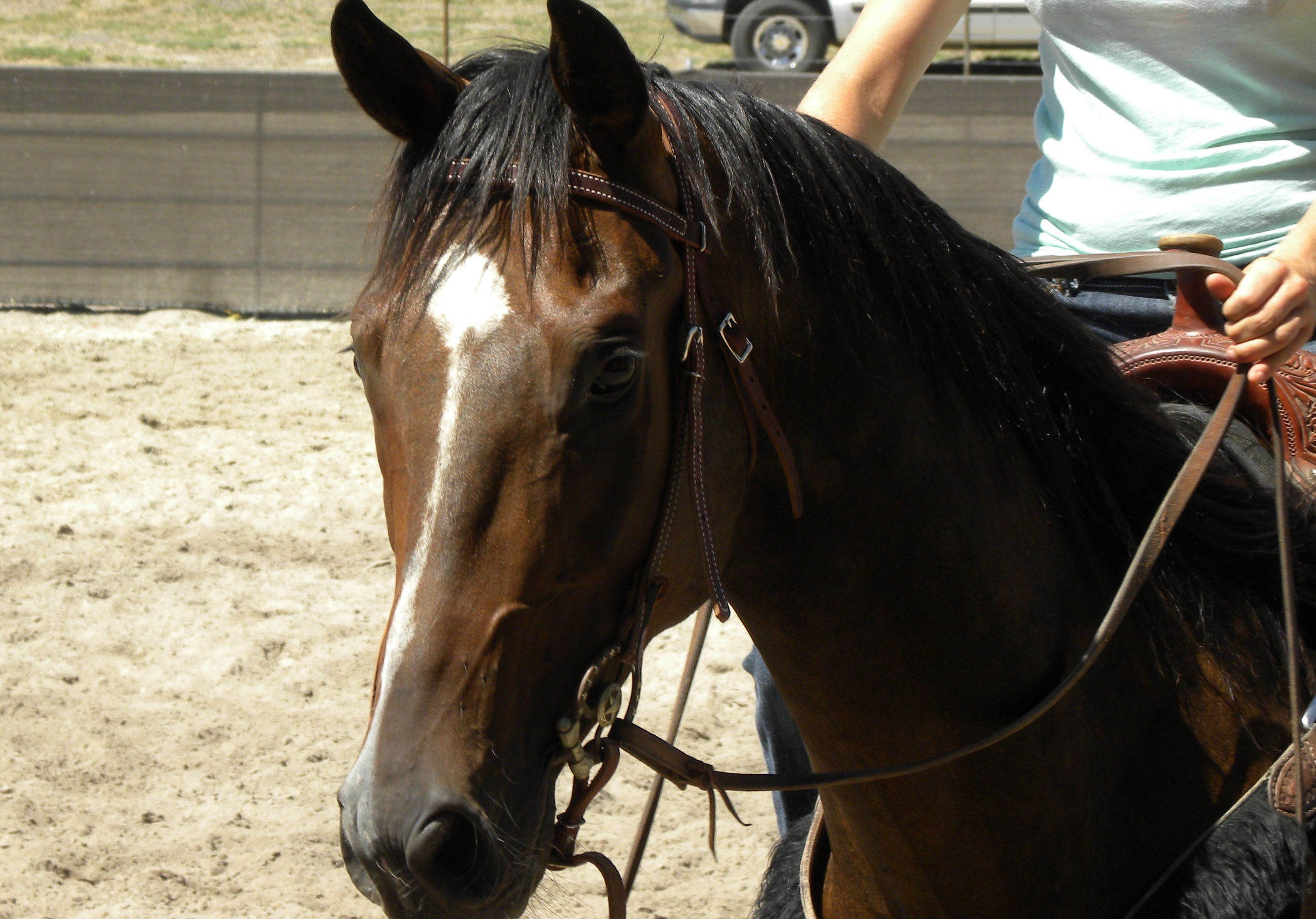 Do Horses Really Decide to be Good or Bad Like Humans?   SLO Horse News