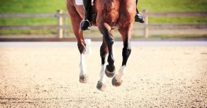 Perfecting the Flying Lead Change Clinic | SLO Horse News