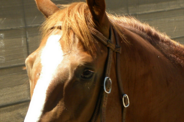 All the Horse Leasing Alternatives to Selling Your Horse | SLO Horse News
