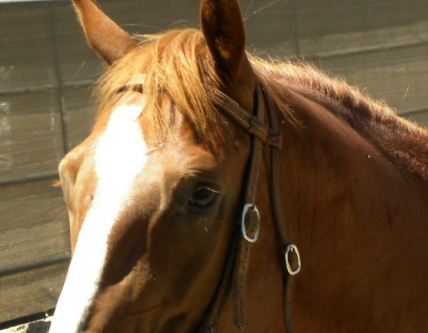 All the Horse Leasing Alternatives to Selling Your Horse   SLO Horse News
