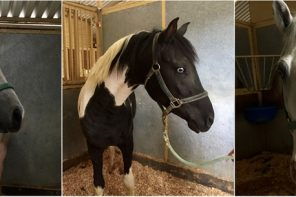 Seized Horses Have Become Adoptable Horses