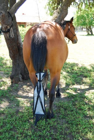 Protect and Nurture the Most Beautiful Horse Tail | SLO Horse News