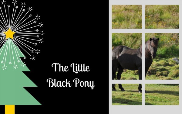 The Little Black Pony : A Christmas Wish Story | SLO Horse News