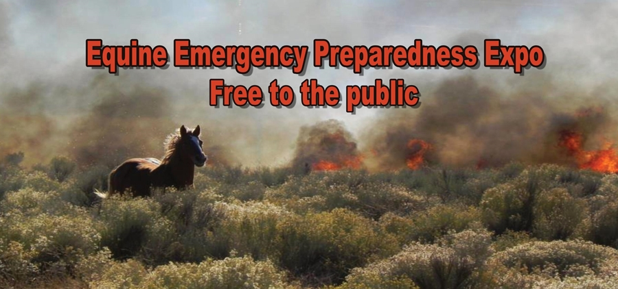 Learn How to Save Your Horse at the Equine Emergency Preparedness Expo | SLO Horse News