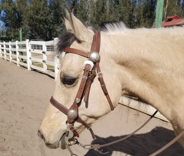 I Forgot My Horse Was Such a Great Friend | SLO Horse News