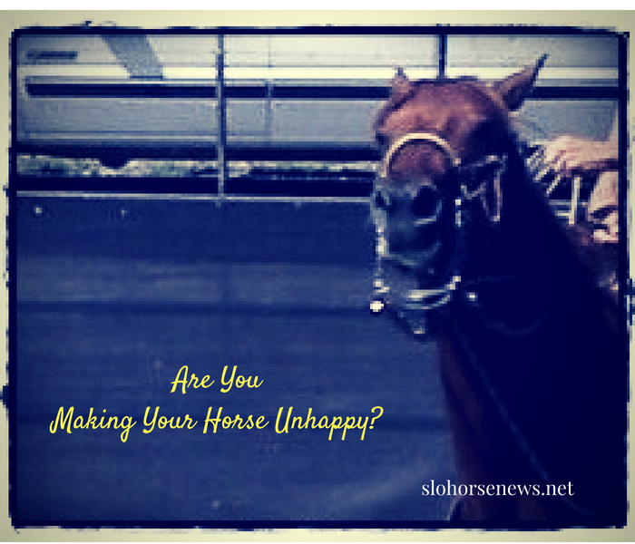 Sometimes the Answers to our Horse's Problems Start with Us as Riders | SLO Horse News