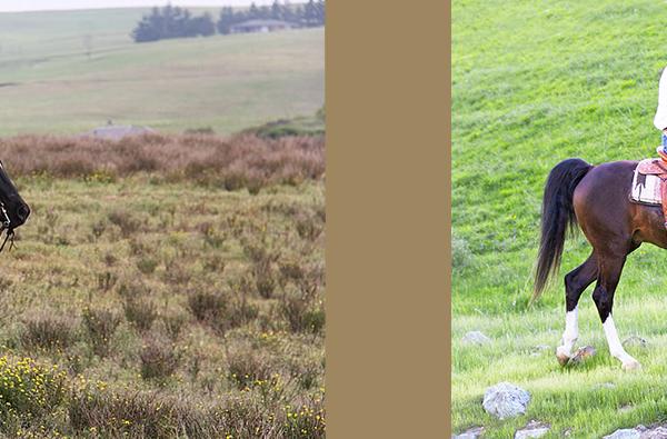 Lester Buckley Clinic: Enjoy Harmony with Your Horse | SLO Horse News