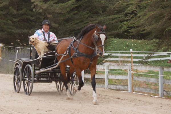Living in a Wheelchair Doesn't Stop Combined Driving World Champion Diane Kastama | SLO Horse News