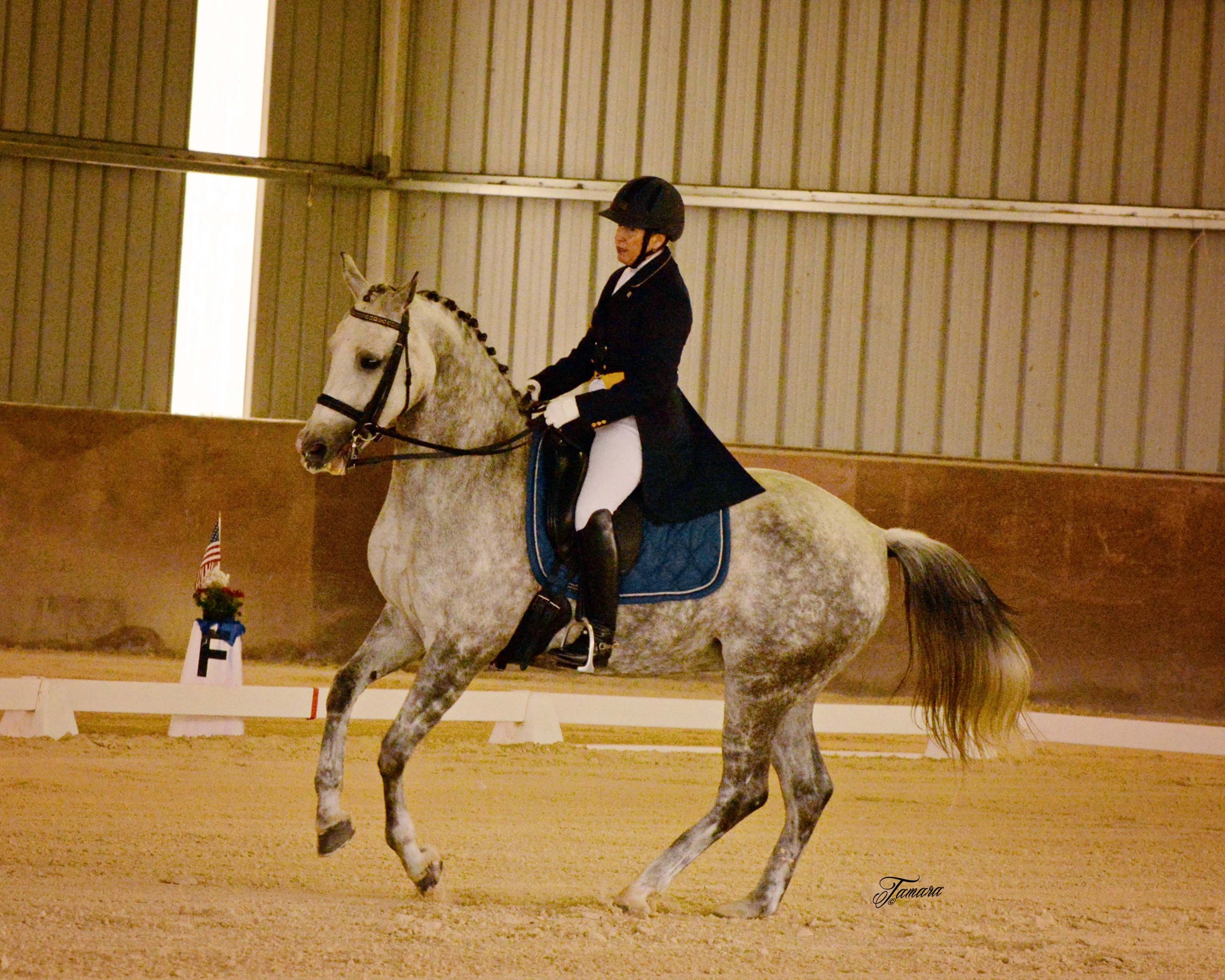 Get into the Local Dressage Action at Two SLO-CDS Dressage Shows | SLO Horse News