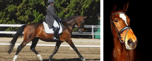I'm sad too - Yes, Animal Companion Grief Is Real | SLO Horse News
