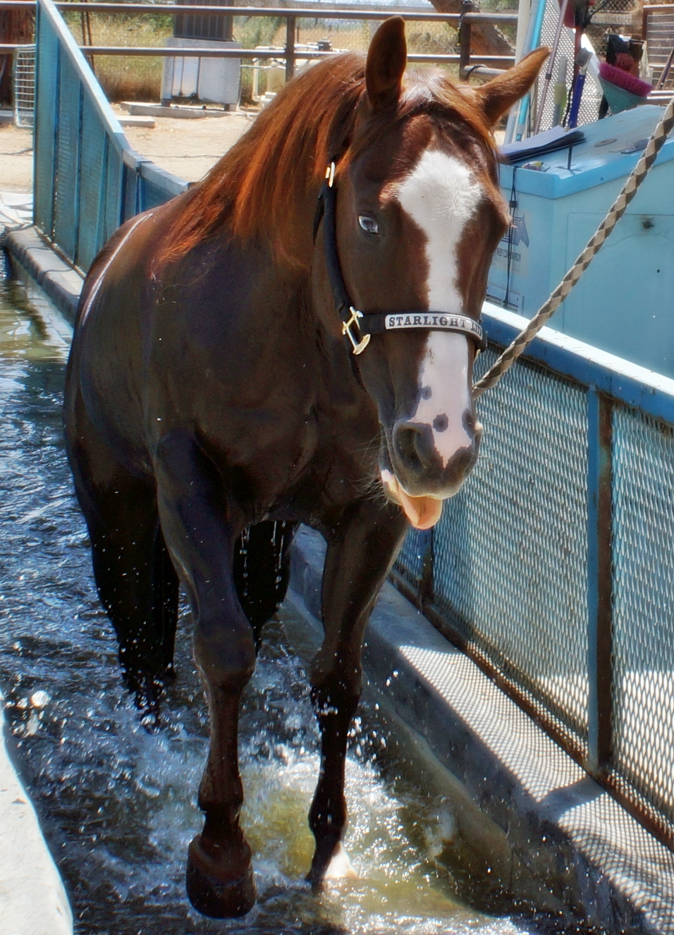 Oasis Equine Rehab With Results Slo Horse News