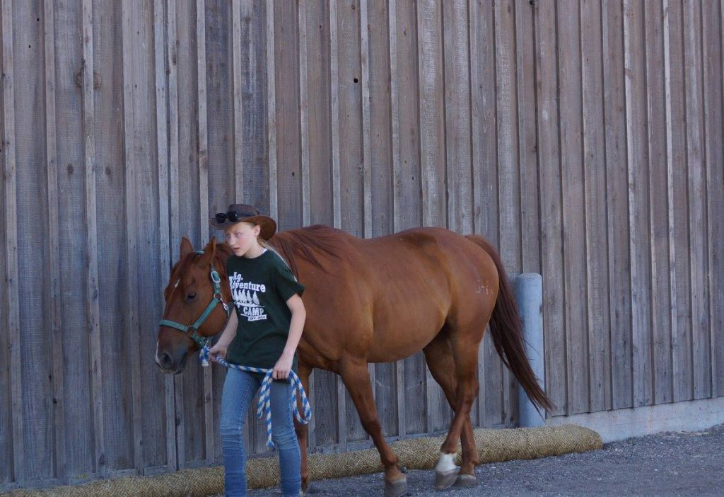 3 Keys to Putting People at Ease Around Horses | SLO Horse News