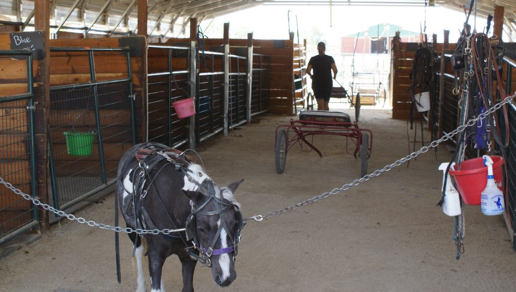 Piece of Me Miniature Horses Setting the Bar for The Miniature Horse World | SLO Horse News