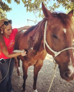 Oasis Equine: Rehab with Results | SLO Horse News