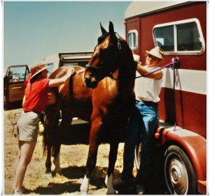 Grooming Your Horse - A Vital Aspect of Horsemanship   SLO Horse News