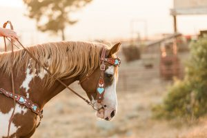 Riding Free Tack Company - Riding Tack Created by Kids for Kids   SLO Horse News