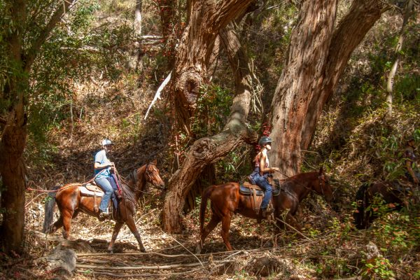 Fun with a Horse Trail Obstacle Course and Other Objectives of a Horse Campout | SLO Horse News