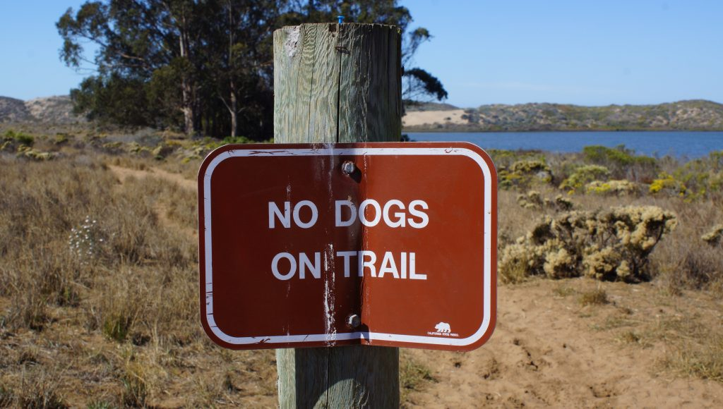 Morro Dunes Trail – Riding the SLO County Trails   SLO Horse News